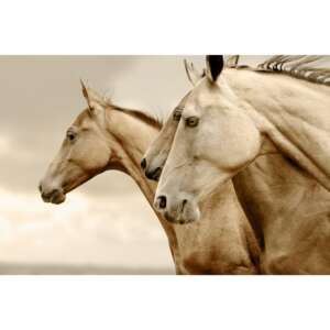 Reverse Sepia Horses Decoupage